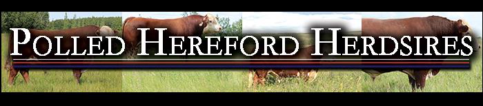 Standard Hill Livestock